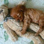 Doudou bebe chien